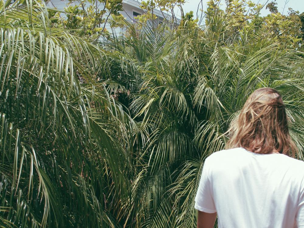 Palm_2a.jpg