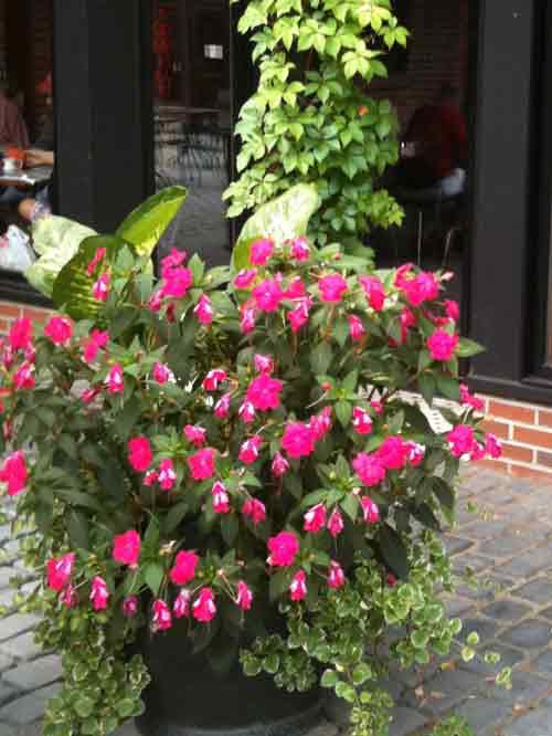 garden-planter5.jpg