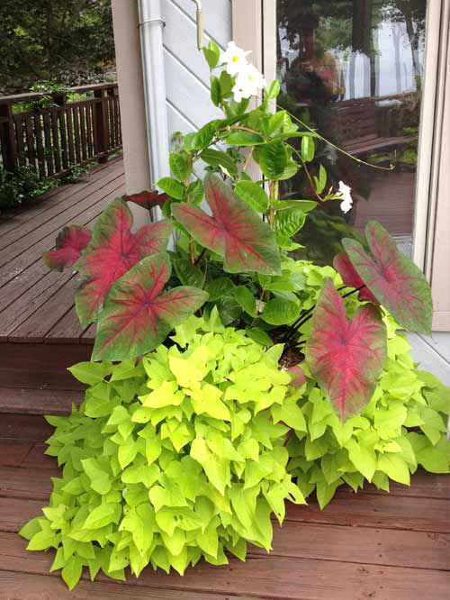 planter-1.jpg