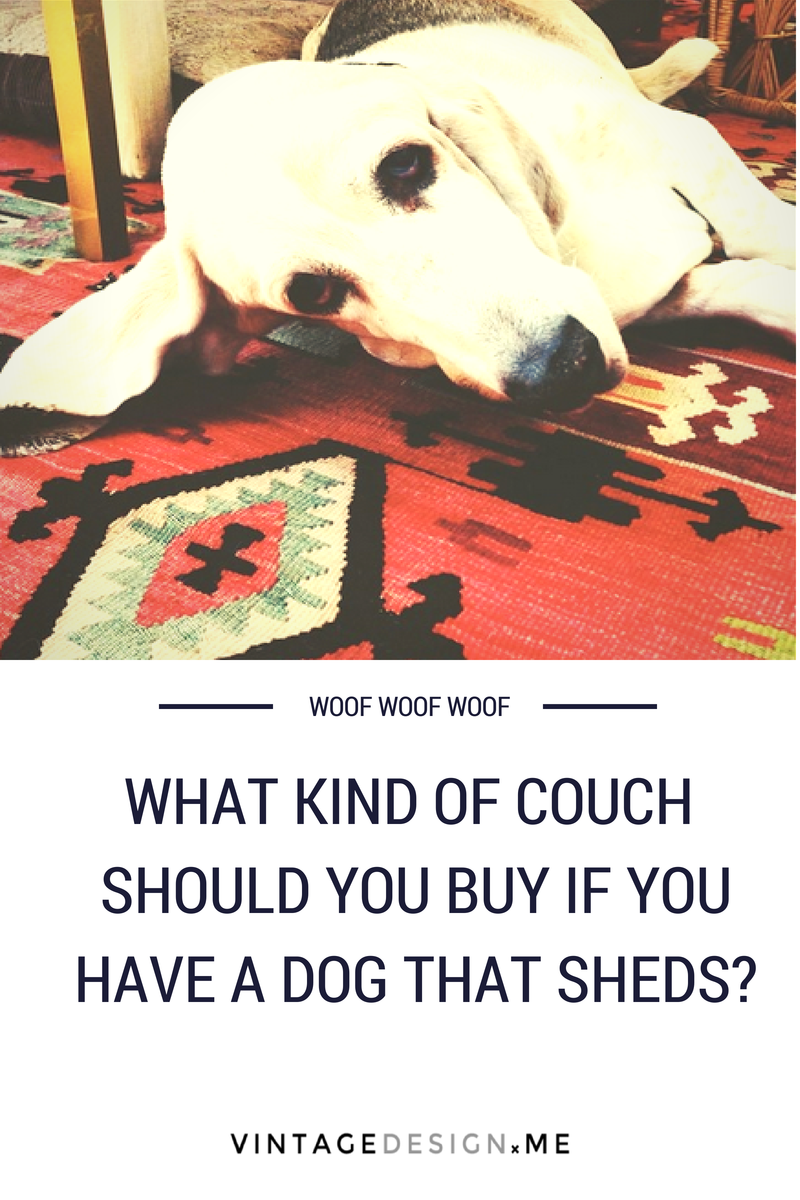 What kind of couch should you buy if you have a dog that sheds