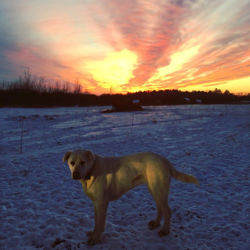 dogs - polly sunset.JPG