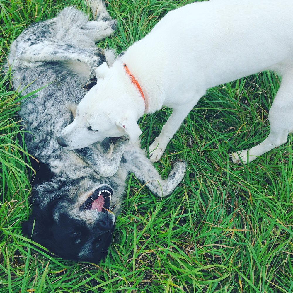 dogs - LenaandPollyPlaying.JPG