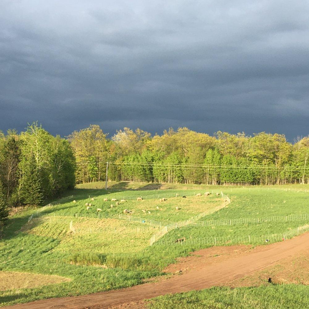 our rotational grazing paddocks