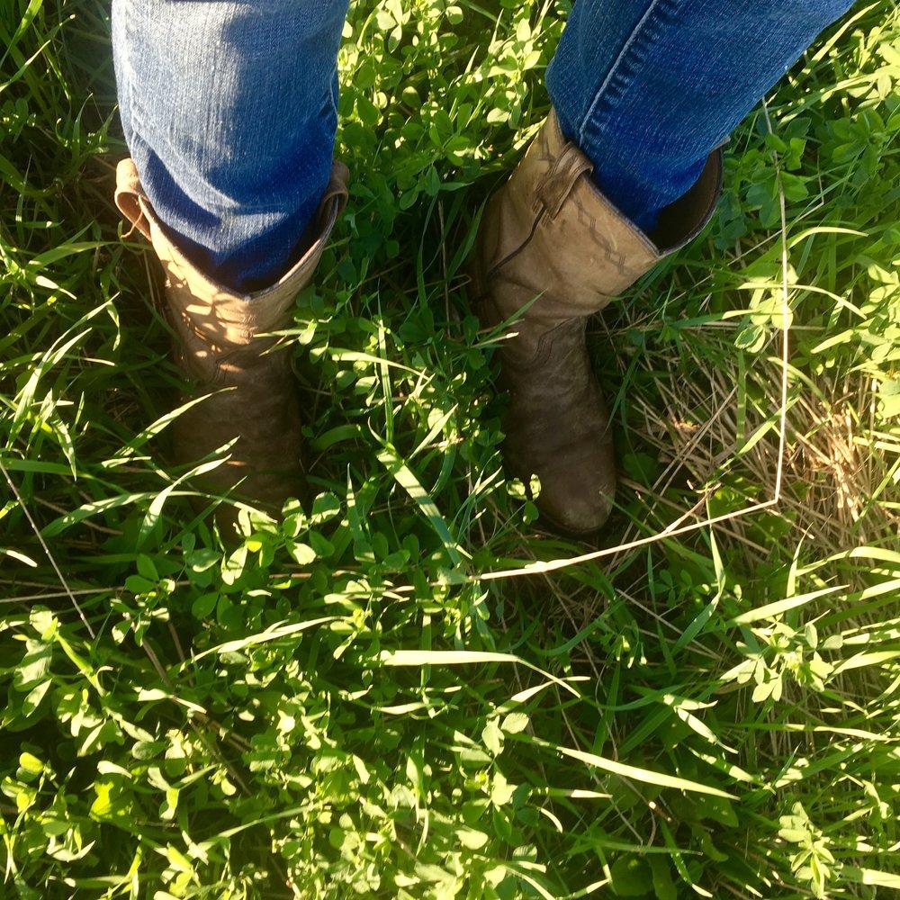 alfalfa amongst diverse pasture grasses