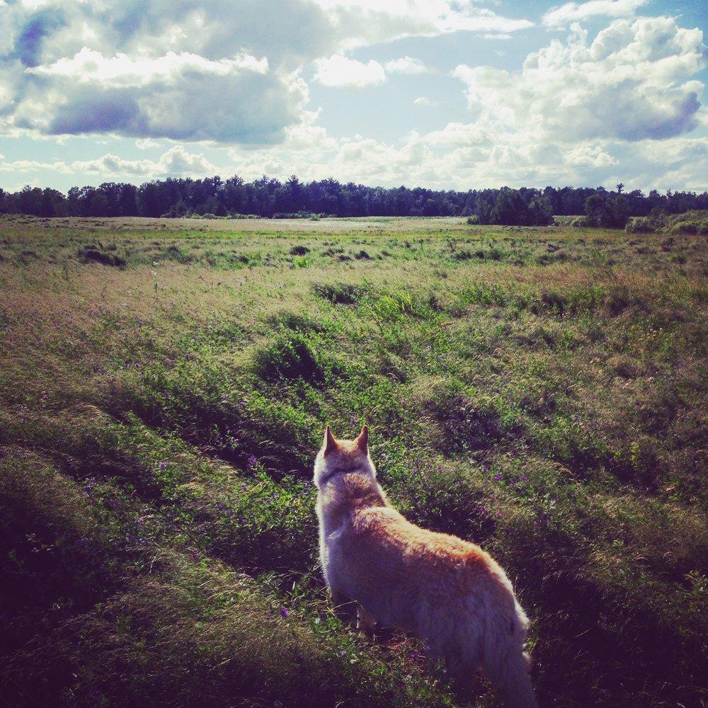 Lu exploring her new kingdom