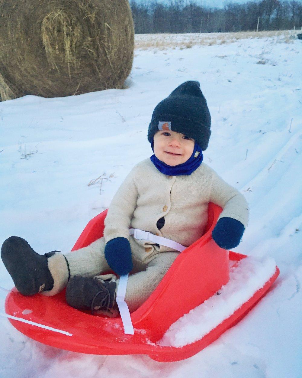 Harvey - red sled.JPG