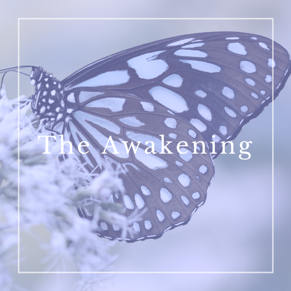 Spiritual Awakening, the four stages of Spiritual Awakening. Where are you? Click through to get your free meditation guide and violet flame procedure.