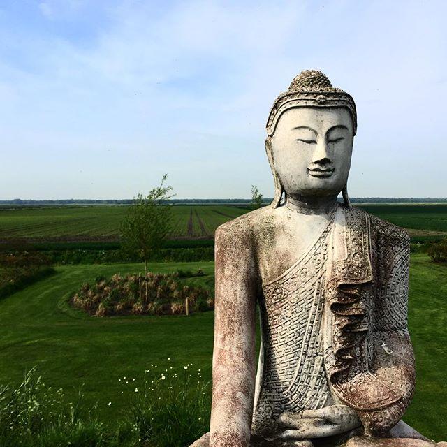 The Buddha #buddha #silence #nature #awareness #maanhoeve
