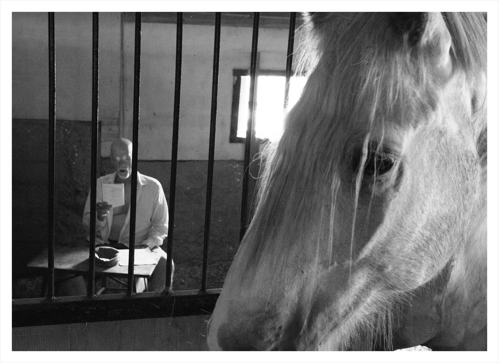 Live Myth : Poet Doug Anderson reads his poem  Live Myth  to Foxy the Shire in his stall at  Blue Star Equiculture