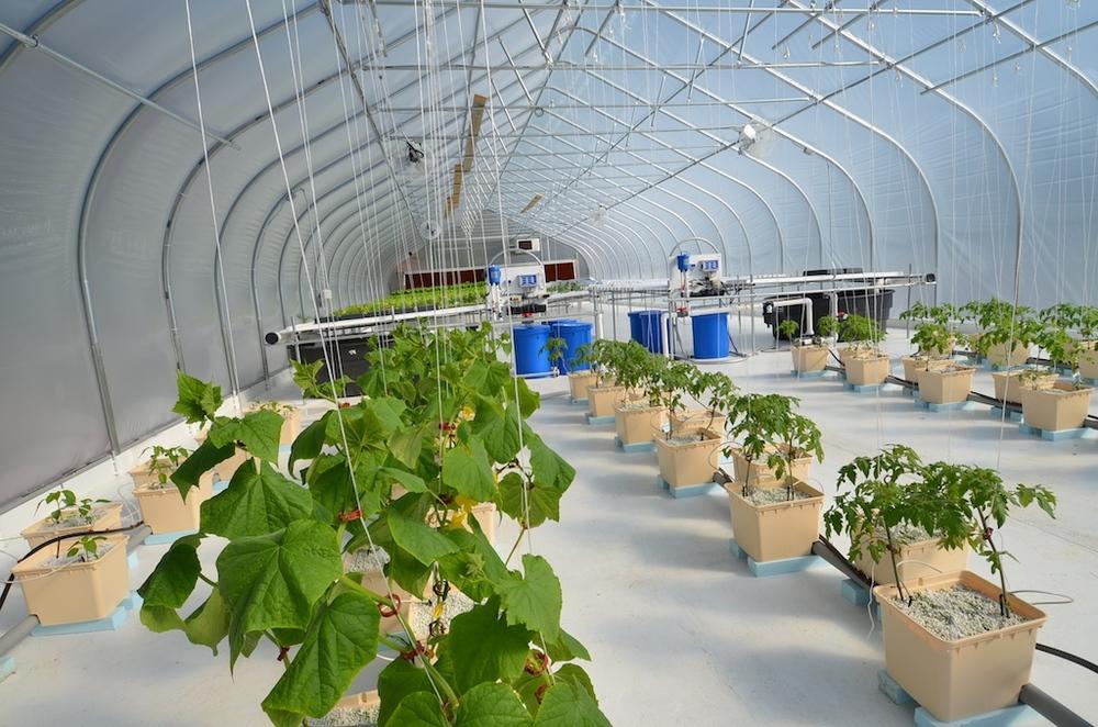 greenhouse  882.jpg
