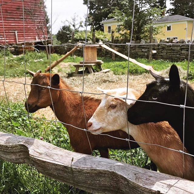 The cutest little goats! Thanks for sharing @the_floristshusband.
