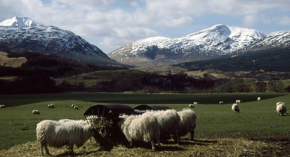 From the West Highland Way, near Crianlarich