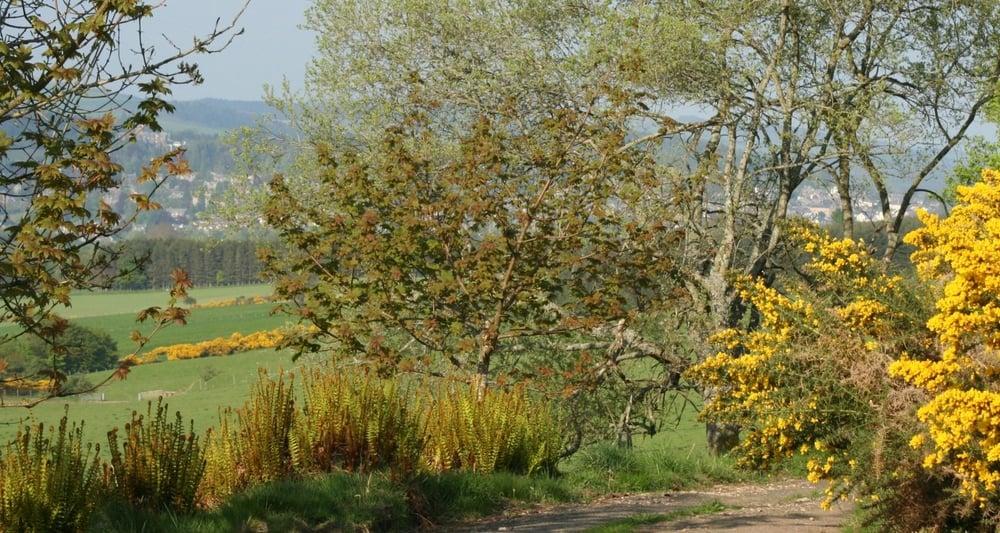 Springtime - on a walk near Crieff (seen through the trees).