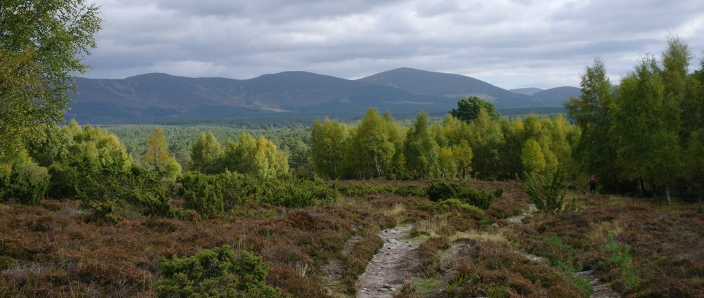 In the Cairngorms National Park, near Aviemore