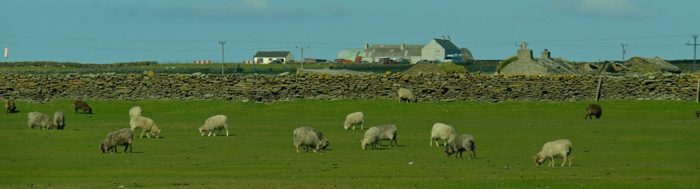 The great wall of North Ronaldsay