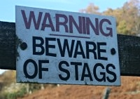 Stags do not attack humans as a rule.