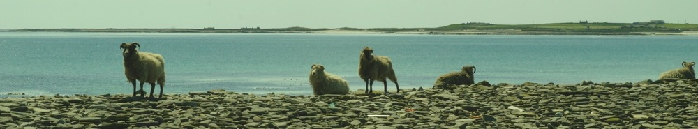 Oh, no, not more sheep. Linklet Bay in the background