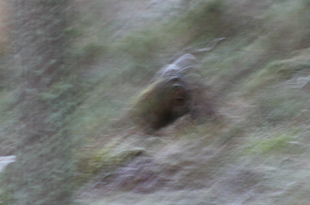 Bigfoot in Scotland - 'Mucklefit'.