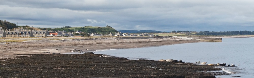 Lots of seals on the shore at Portgordon in Moray.