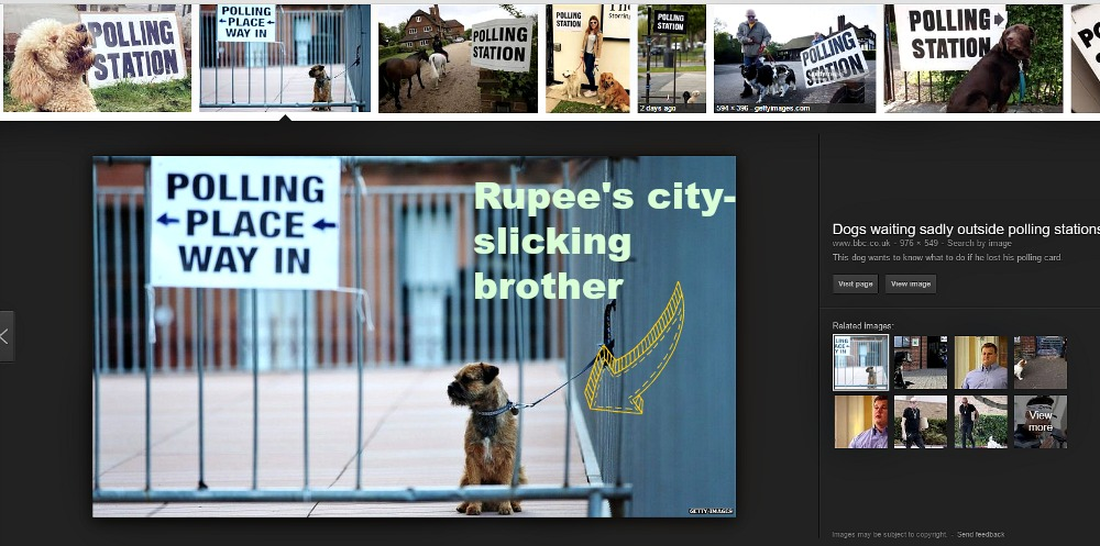 SImba the terrier's image now belongs to Getty Images. Gosh.