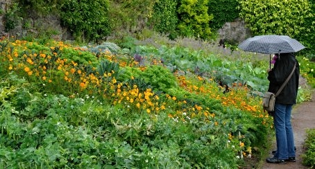Inverewe Gardens, Wester Ross. The vegetables need the rain.
