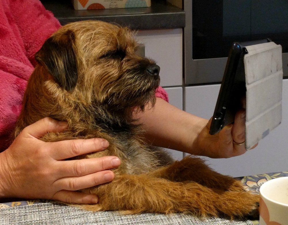 Robbie checking the Dugs n Pubs website.