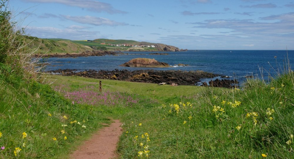 Near Eyemouth - May