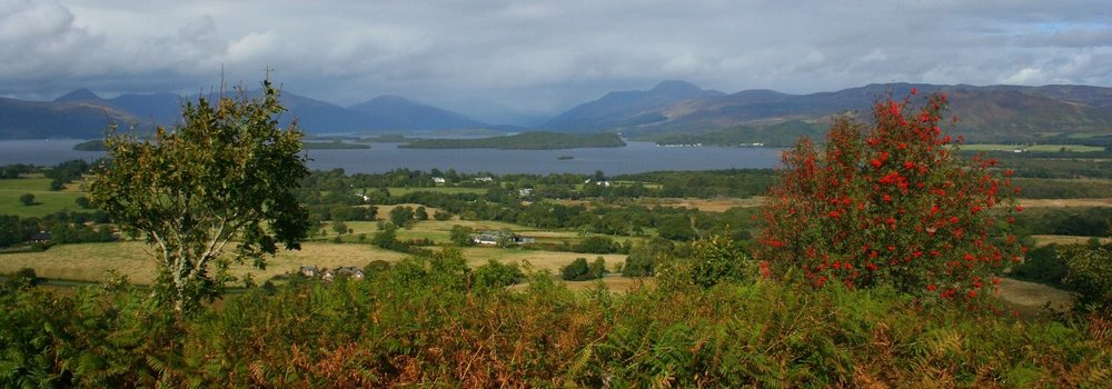 LOCH LOMOND FROM DUNCRYNE HILL, LOOKING NORTH INTO THE HIGHLANDS. AUTUMN - NOTE THE ROWAN BERRIES.