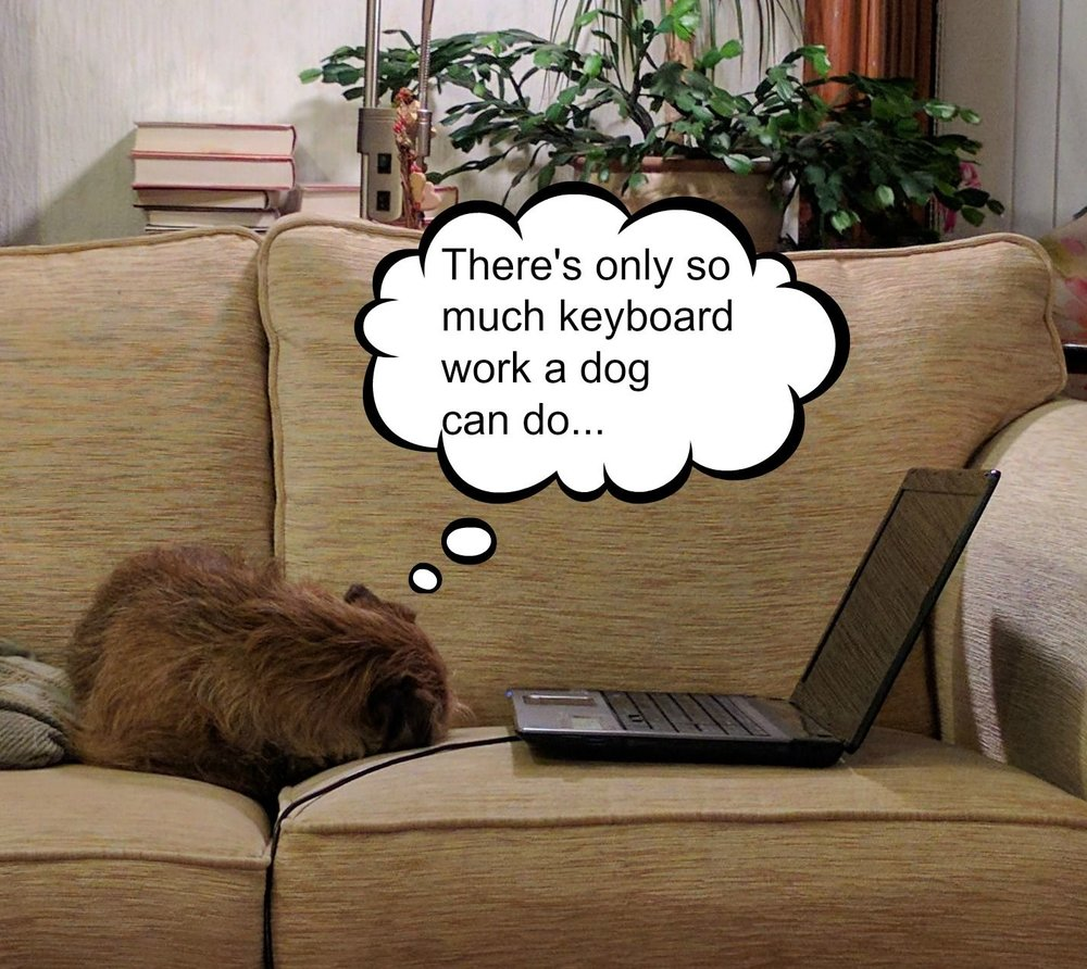 border-terrier-keyboard
