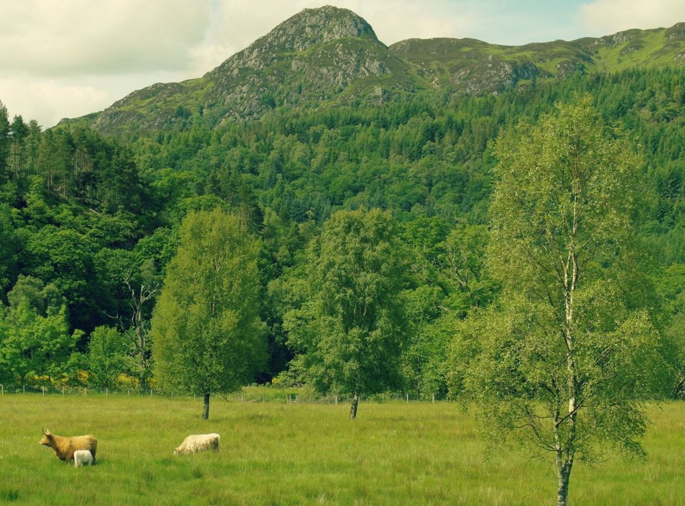 The prominent little peak of Ben A'an on the edge of the Trossachs and also - quick, get the camera - Highland cattle. And it's only about an hour away by road from Edinburgh or Glasgow. You don't need long to see this Highland part of Scotland.