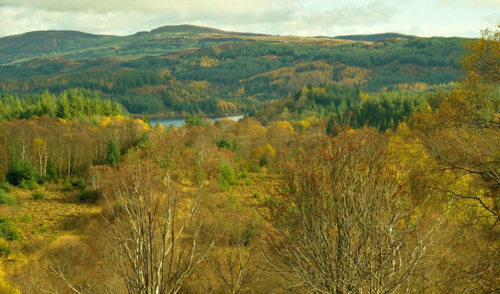 This pic is dated 1st November. In the hill slopes further off, you can see the larches are still coloured up. The birches (there's one on the right), still have some leaves, though are probably past their peak. The rowan (I think) in the foreground seems to have shed most of its leaves.  Compare this picture to the one below, taken just slightly later in the month - but in a different year.