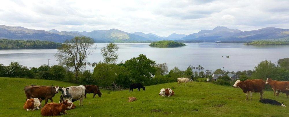 View of Loch Lomond from Portnellan Farm
