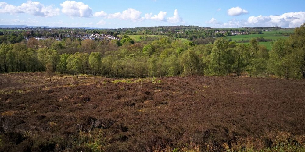 This is Mugdock Country Park in May, so the heather hasn't come into bloom yet - but there's plenty of it. Looking south towards the edge of the city of Glasgow. The long-distance footpath, the West Highland Way, is only a few moments away.