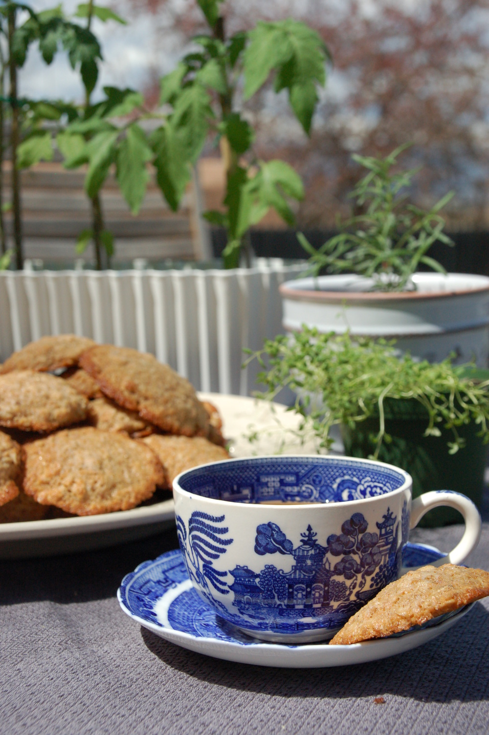 Enjoying these crunchy roasted coconut and oats cookies in the sun today.