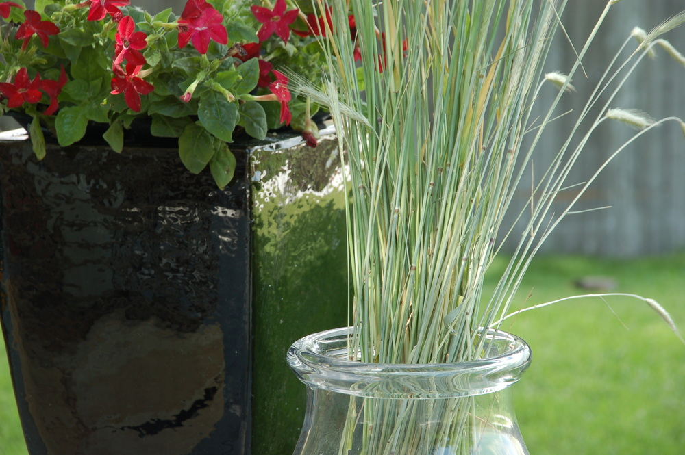 Tall grass in a vase.
