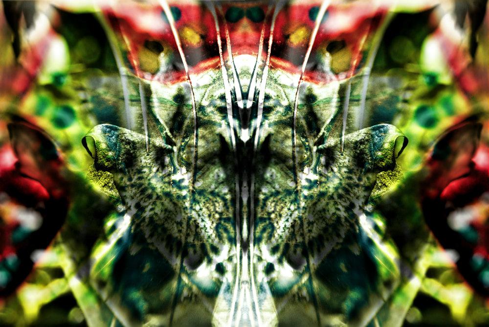 Fenwick.Butterfly