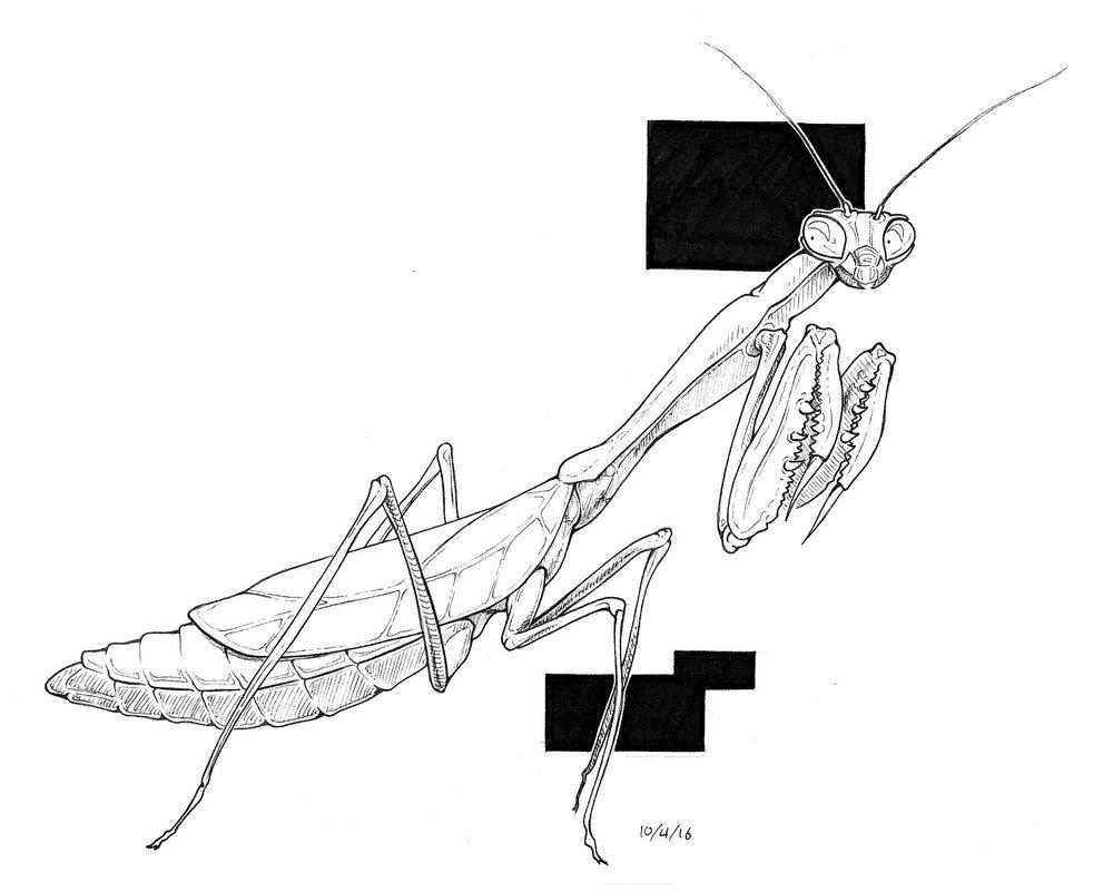 mantis_jpg (2).jpg
