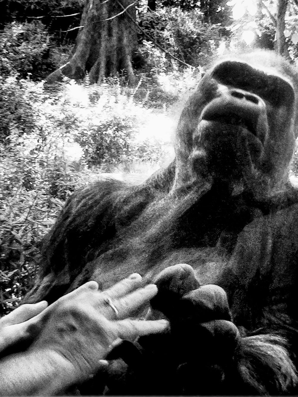 Gorillas.8.jpg