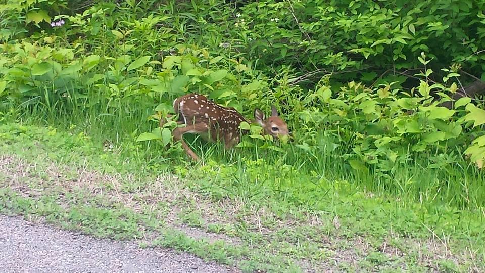 Newborn fawn nearby our headquarters