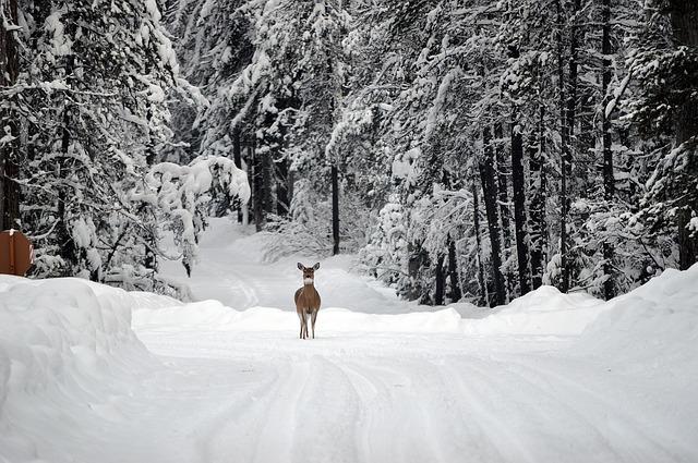deer-1605673_640.jpg