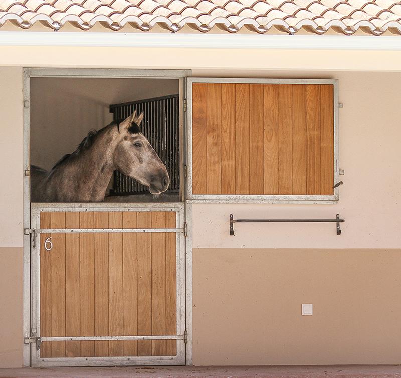 Cavalos na Quinta M