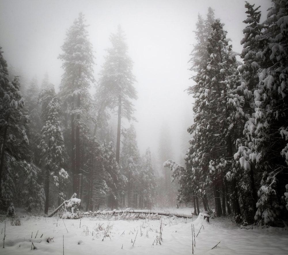 Snow-Scene.jpg