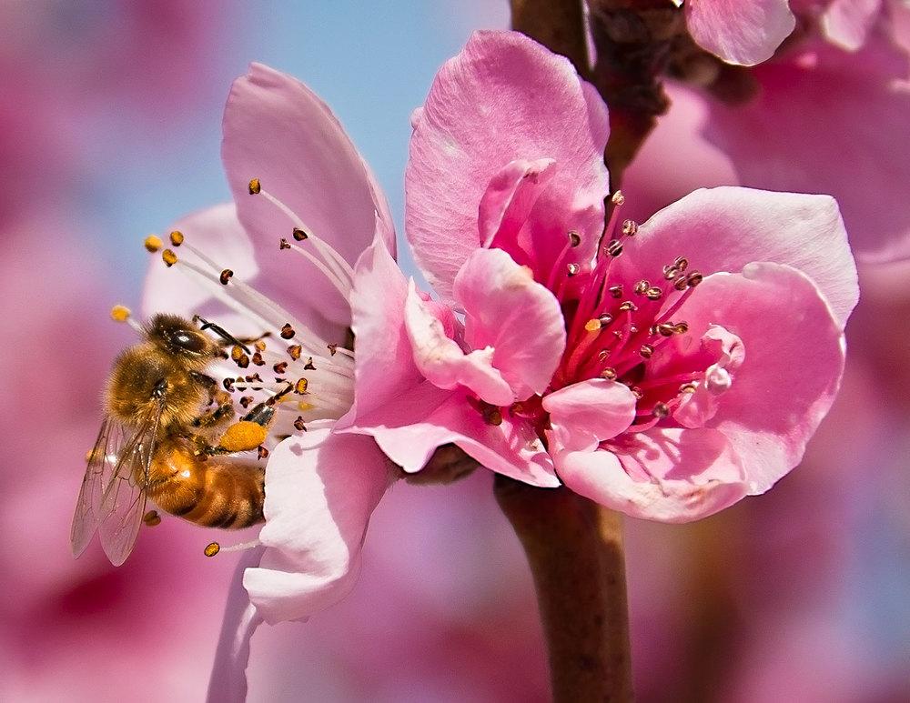 Bloom-Bee.jpg