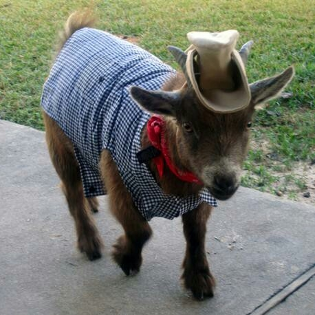 livestock costumes.jpg