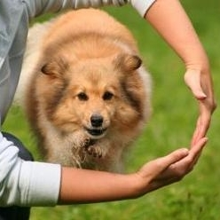 Dog-Training-Trick.jpg