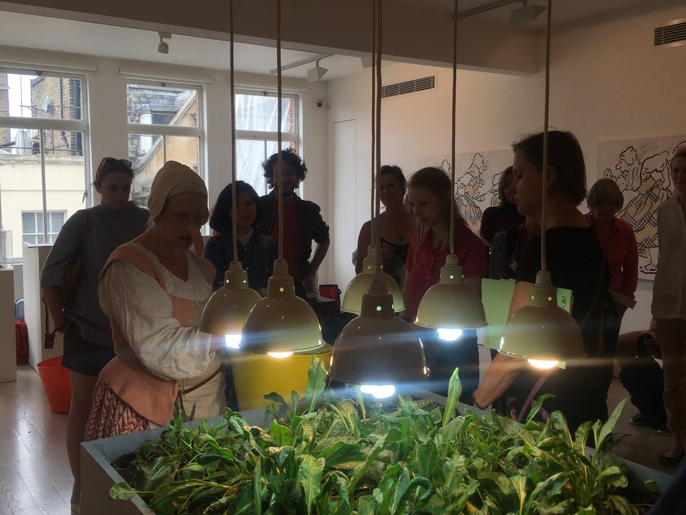 Harvesting the woad growing in the gallery