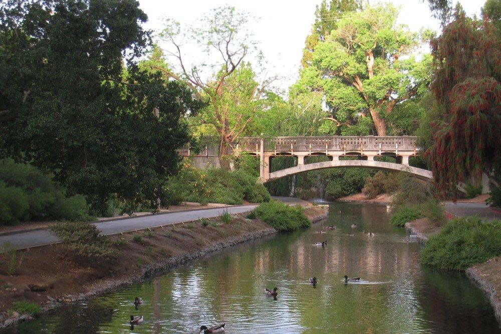 UC_Davis_arboretum_-_ducks.jpg