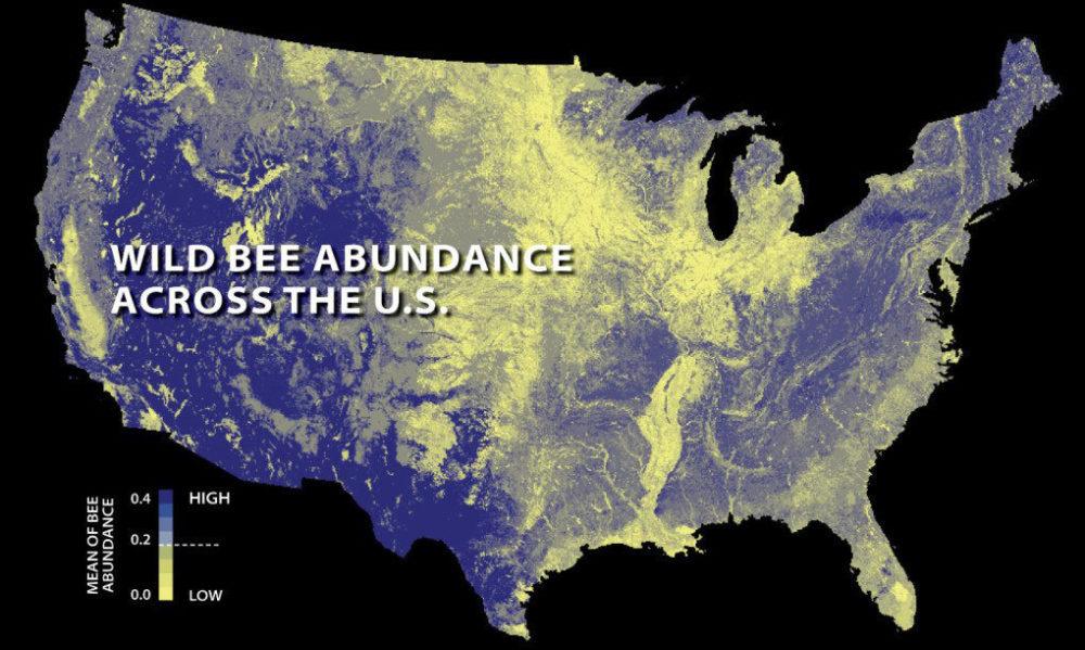 bee abundance states.jpg