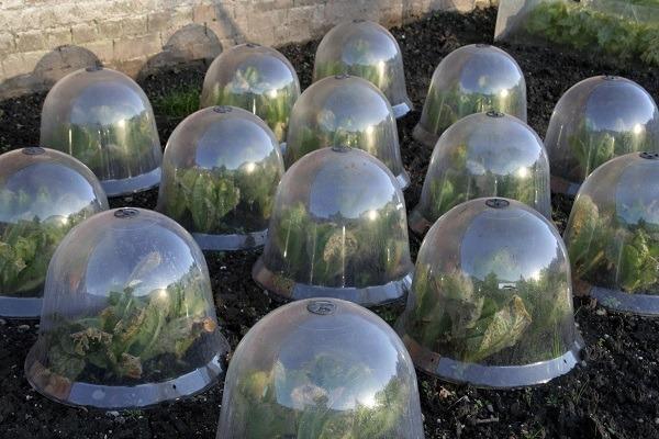 cold-weather-gardening1.jpg