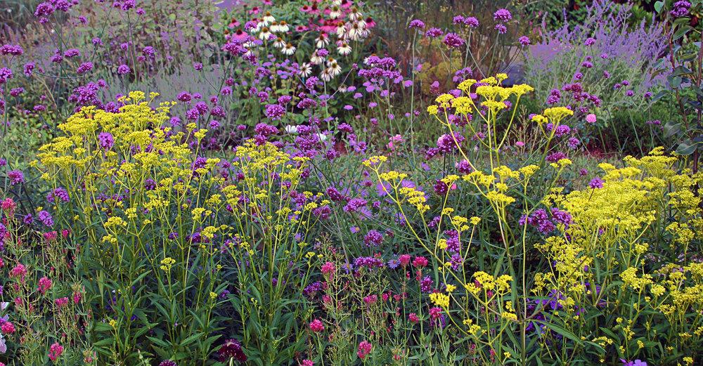 slider_wildflowers.jpg